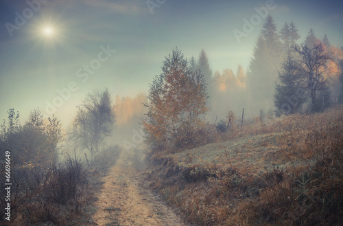 Misty autumn forest - 66696649