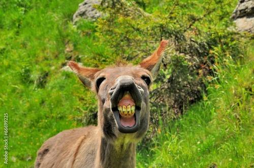 Foto op Aluminium Ezel Funny donkey