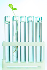 Green plant in test tubes which are with water