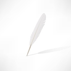 Vector white feather