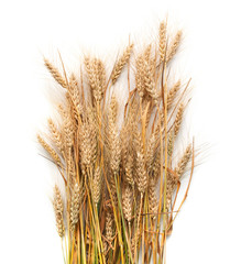 Spike of wheat  isolated on white background
