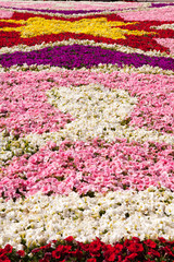 Floral Display, Valletta, Malta
