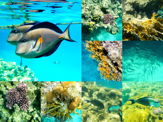 Coral and fish in the Red Sea, Egypt, Africa.