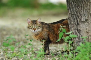Pretty stray cat looking from behind tree