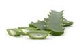 aloe vera fresh leaf. isolated over white