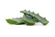aloe vera fresh leaf
