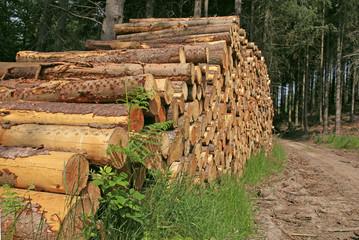 exploitation forestière
