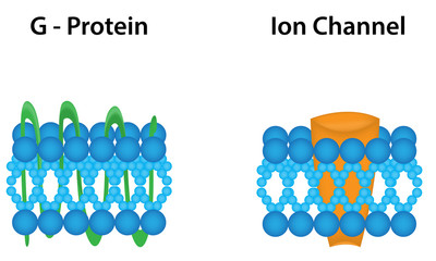 G Protein and Ion Channel