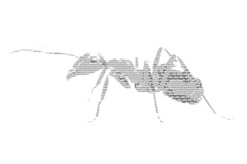 word ant mixed to be figure of ant, with typography style, isola
