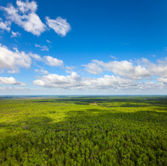 Boundless forests, top view
