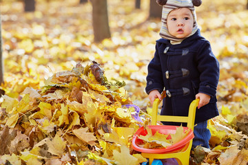 Little boy carries plastic wheelbarrow loaded with dried leaves