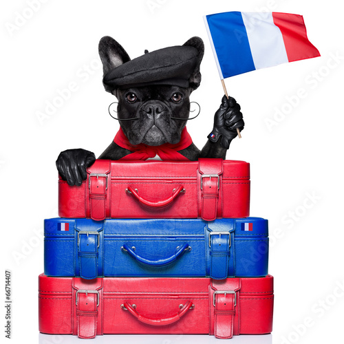 canvas print picture french dog