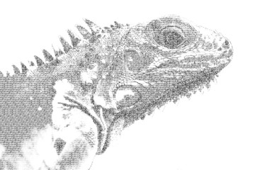 word iguana mixed to be figure of iguana, with typography style,