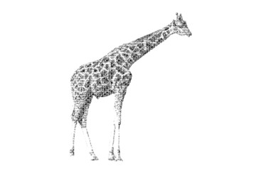 word giraffe mixed to be figure of giraffe, with typography styl
