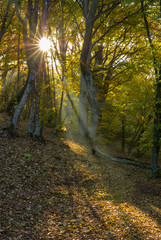 Morning in a beech forest in Ukraine
