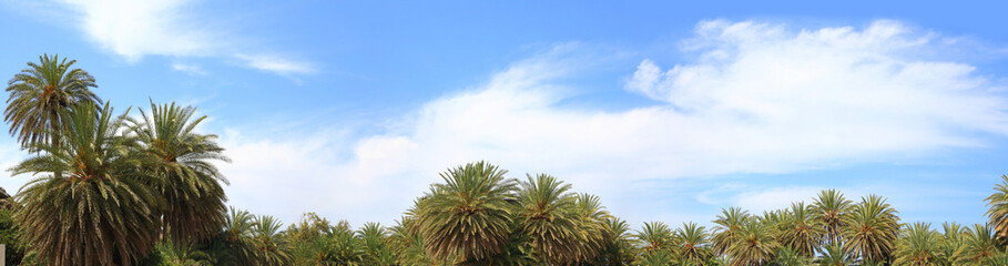 Blue sky, soft clouds and palm trees tops