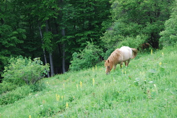 Horse at grass