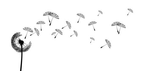 pusteblume2606b