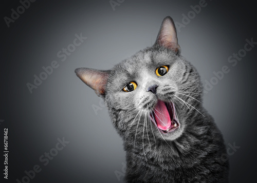 Spoed canvasdoek 2cm dik Kat Cat