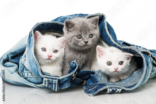 Poster, Tablou Katzenbabies