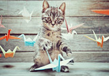 Little kitten is playing with colorful paper cranes