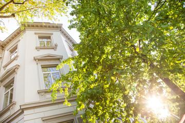nobles Haus und Bäume - Altbau in Wiesbaden