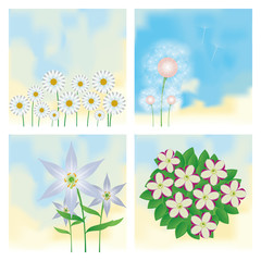 Set Of Different Colorful Flowers Isolated