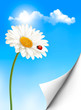 Nature summer background with daisy flower with ladybug. Vector