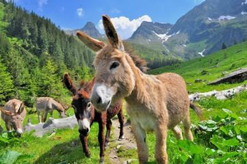 Mountain valey landscape with donkeys