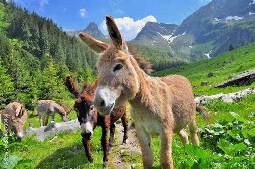 Mountain valey landscape with donkeys - 66730466