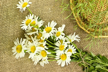 Daisies on burlap background