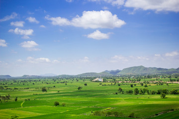 Natural rice field and blue sky at the rural of Thailand.