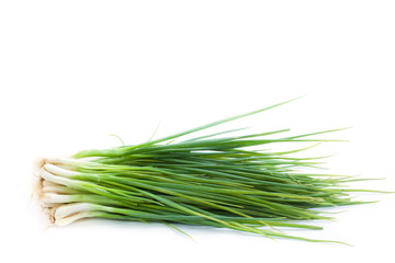 spring onion bunch on white background