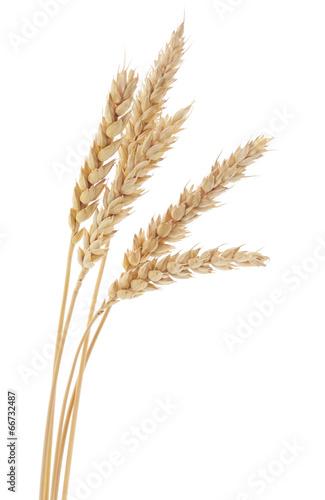 Foto op Plexiglas Aromatische Wheat Bunch