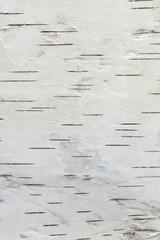 birch bark, texture