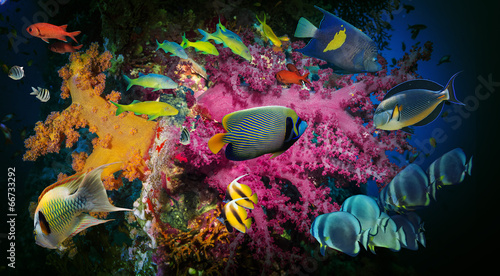Coral and fish - 66733292