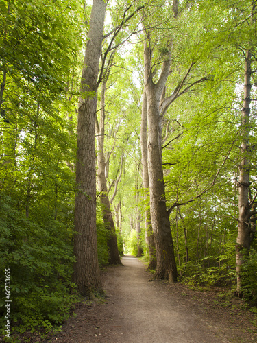 canvas print picture Der Weg