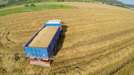 Large truck transport grain from the field. Aerial view.