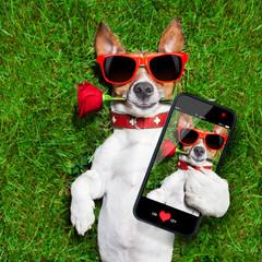 valentines dog selfie