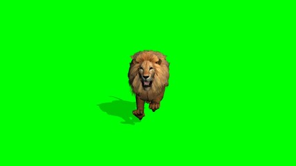 lion runs on green screen