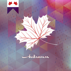 Autumnal maple leaf. EPS 10