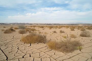 Egyptian Desert