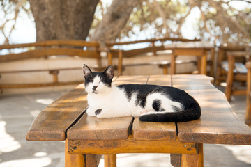 Sleeping cat on tavern table, Crete, Greece
