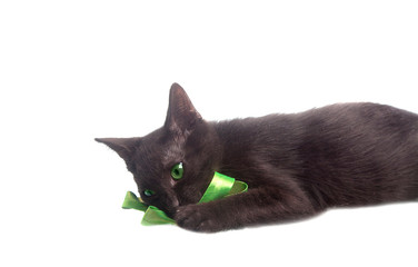 Cute kitten playing with green ribbon