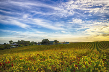 McLaren Vale vineyard and house