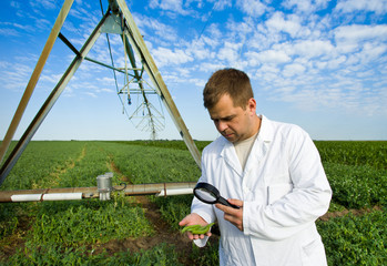 Agronomist in peas field