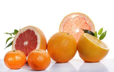set of citrus fruit on white background