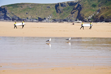 Surfers walking in a beach with seagulls