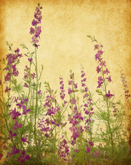Old paper background with delphinium flowers