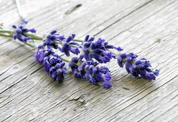 Lavendel zum Trocknen ausgelegt